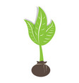 isolated plant icon vector image
