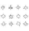 maple outline stylized leaves vector image