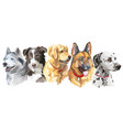 set of big dog breeds vector image