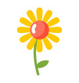 chamomile isolated flower on white background vector image vector image