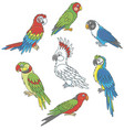 funny colorful parrots vector image