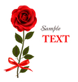 Red rose with bow and ribbons vector image