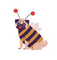 cute dog pug breed in bee costume flat vector image