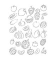 graphic fruit vector image