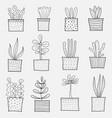 line hand drawn doodle cactus set vector image