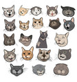set funny cats collection portraits vector image