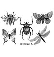 set insects in vintage hand drawn style vector image vector image