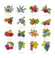 set of doodle pied berries isolated on white vector image