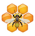 symbol working bee on honeycells vector image vector image