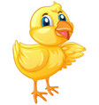 cute chick on white background vector image vector image