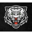 face a white tiger on dark background vector image vector image