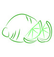 green lime drawing on white background vector image vector image
