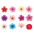 set beautiful flowers icons vector image