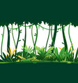 tropical rainforest on white background vector image