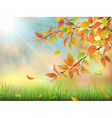 Autumn leaves grass and drops vector image vector image
