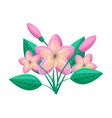 frangipani tropical plant vector image