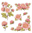 gentle floral set flower elements isolated vector image