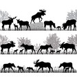 herd of moose vector image vector image