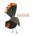 rhipidura bird cartoon childish book character vector image vector image