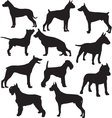 set silhouettes standing working dogs vector image