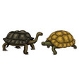 tropical turtle and tortoise shell animals vector image