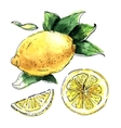 Watercolor set of lemons vector image vector image