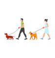 man and woman walking dogs vector image