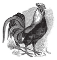Rooster vintage engraving vector image