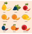 Set of colorful cartoon fruit icons apple pear vector image vector image
