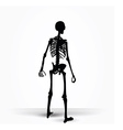 skeleton silhouette in standing pose vector image vector image