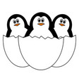 three penguins in egg shell on white background vector image vector image