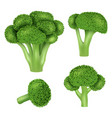 broccoli cabbage icon set realistic style vector image