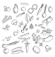 Fresh vegetables and herbs sketches vector image vector image
