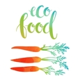 carrots with eco food lettering vector image vector image