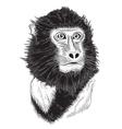 portrait of monkey vector image vector image