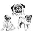 pug dog sketch icon set vector image