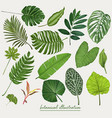 tropical leaves botanical vector image vector image