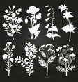 white herbal and floral silhouettes on chalkboard vector image