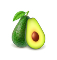 Avocado and slice isolated on white vector image