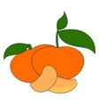 fresh orange mandarin on white background vector image vector image