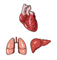 human organs cartoon icons in set collection for vector image vector image