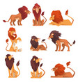 powerful lions collection mammal wild cats jungle vector image vector image