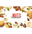 realistic nuts background vector image vector image