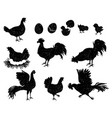 rooster hen and chicken silhouettes for vintage vector image vector image