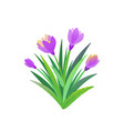 spring garden flower bouquet background vector image