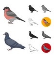 types of birds cartoonblackflatmonochrome vector image vector image