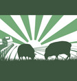 sheep farm sunrise landscape vector image vector image