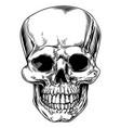 vintage skull vector image