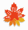 autumn maple leaves with the vector image