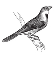 Dickcissel vintage engraving vector image vector image